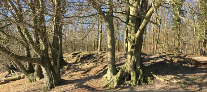 NATUR- Vild med skov