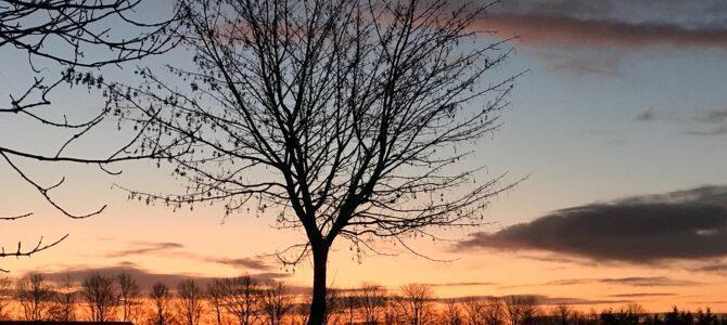 Vejret: Godmorgen iskolde lørdag