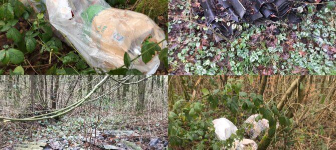 Skovtur afslørede skovsvin