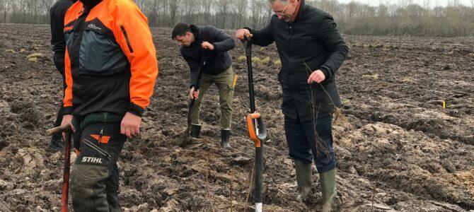Ny bynær skov på vej i Tønder